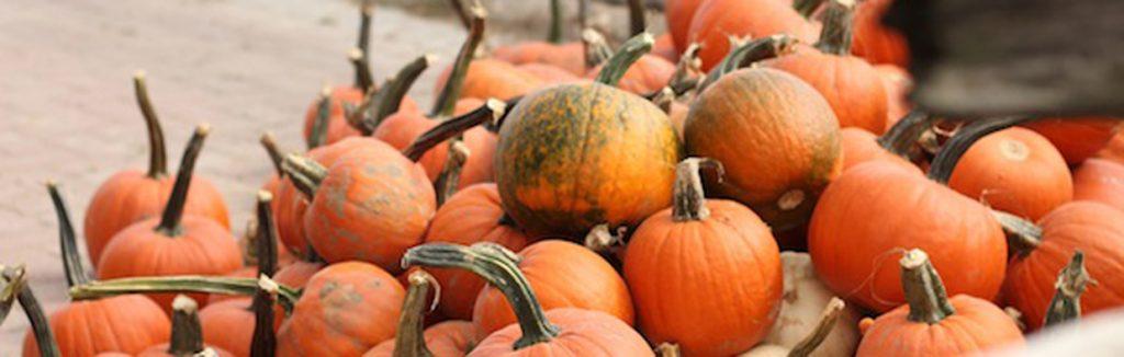Fall Favourites!